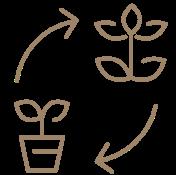 ドライ盆栽の交換
